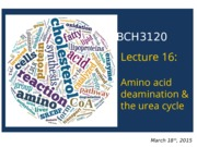 2015 - BCH3120 - Lecture 16 - S