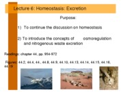 Lecture 6 Homeowater2011
