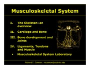 Musculoskeletal_System Lectures_I-IV_LARGE SIZE