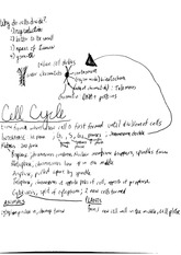 ap bio cell cycle notes