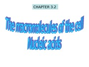 The Macromolecules of the Cell- Nucleic Acids