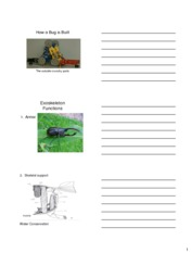 how bugs are built external student handouts