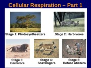 Lecture 7 How cells harvest energy - Chapter 70
