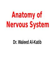 12. Anatomy of Nervous System (1).ppt