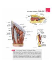 Floor of femoral canal and retro-inguinal passage.jpg