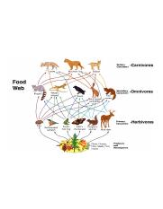 Food Web+.png