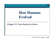 13_from_hominin_to_homo