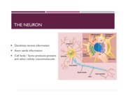 Chapter 2 (Structure _ Function of the Nervous System)