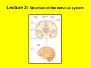 (2) Structure of the nervous system.ppt