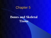 Skeletal_System_good