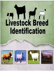 Livestock Breed ID - Cattle PowerPoint (AGR100)