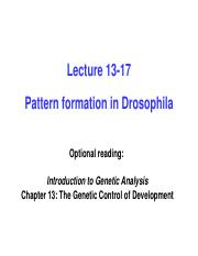 Pre-Lecture 13 Cytoplasmic determinants and pattern formation in Drosophila