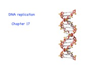 ch369_ch 17-DNA replication
