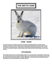 Arctic Hare - adaptations for survival in the far north