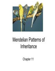 Ch 11 Mendelian Patterns of Inheritance.pdf
