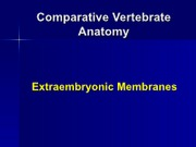 embryology extraembyonic membrames