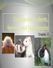Chapter 7- Rodents, ferrets, lagomorphs.pptx