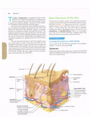 The Integumentary System.pdf