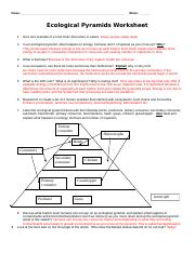 KEY ecological-pyramids-worksheet_2013.doc - Name Block ...