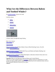 What Are the Differences Between Baleen and Toothed