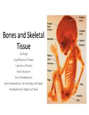 Bone Physiology 1718.pdf