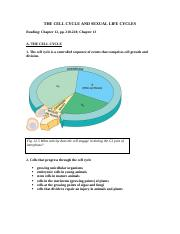 10 - _Cell_Cycle_Summer_2006.pdf
