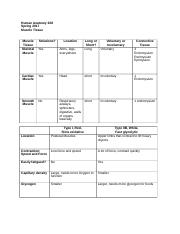 S17 Muscle Tissue Worksheet.docx