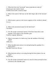 Study Questions - Ch 3.docx