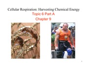 Topic 6 Part A Cellular Respiration S10 1pp