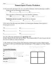 Punnett-Square-Practice-Questions-Answer-Key - Punnett ...