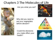 Chapter 3 Molecules of Life