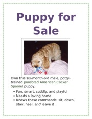 Lab 1-1 Puppy for Sale Flyer - Knows these commands sit down stay ...