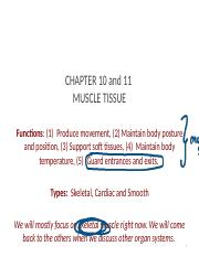 Ch. 10 11 (Muscle Tissue).pptx