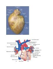 anatomy heart eye ear