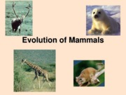 Lect 18 - May 29 - Evolution of Mammals