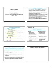 chapter 17 worksheet chapter 17 gene regulation in eukaryotes there are four main differences. Black Bedroom Furniture Sets. Home Design Ideas