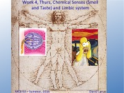 Week 4 Session 3, Smell and Taste, Limbic System.pdf