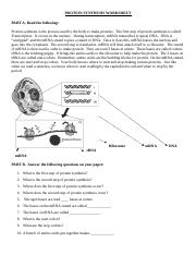 protein-synthesis-worksheet (3) - PROTEIN SYNTHESIS WORKSHEET PART ...