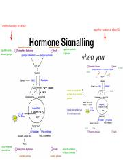 Lecture 10 Friday, June 3 (Hormone Signalling).pdf