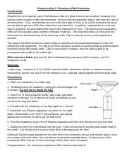 answers_strawberry_dna.pdf - Answer Key for Strawberry DNA ...
