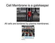 Lecture 4 - Cell membrane