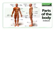 parts-of-the-body-english