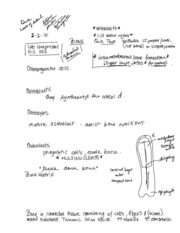 Histology_bone and review epith