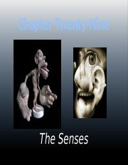 Chapter 29-The Senses