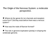 The origin of the nervous system_A molecular perspective