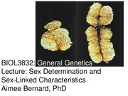 STUD 3 Sex Determination and Sex-Linked Characteristics