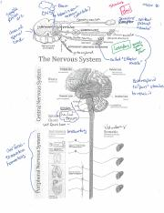 Notes for The Nervous System 10.06.16