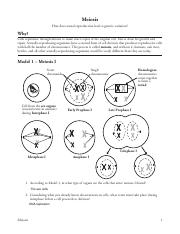 APB- Meiosis POGIL.pdf - Meiosis How does sexual ...