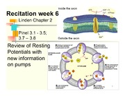 Fall 14 recitation week 6 pumps & receptor types-1