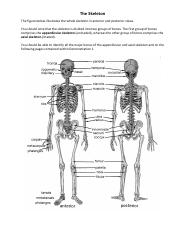 Anatomy Lab WholeSkeleton.pdf